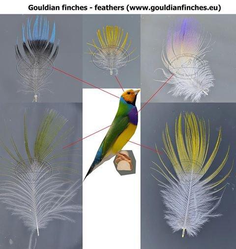 histoire de plumes