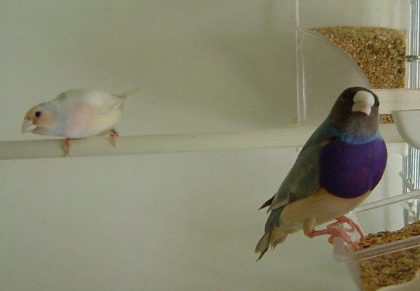 échange d'oiseaux