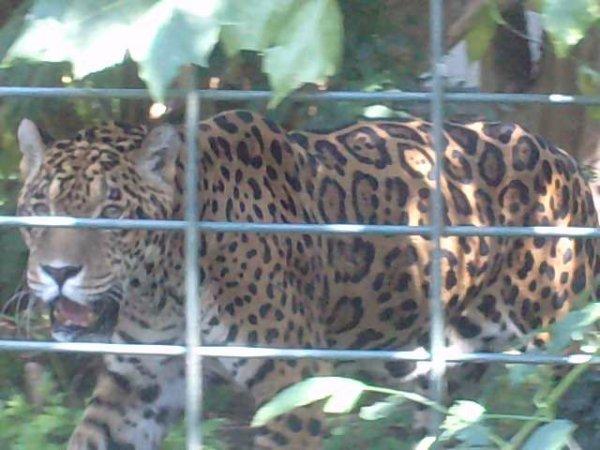 Journée au zoo :)