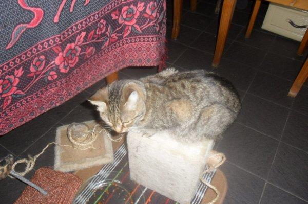 Hommage as mémère ma chattedéjà 34 semaine que tu es partie mémère - Hommage as mémère une de mais chatte décède décédée
