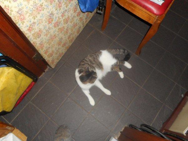 Hommage as mémère ma chatte déjà 37 semaine que tu es partie mémère - Hommage as mémère une de mais chatte décède décédée