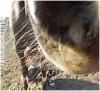 Horsedreamer