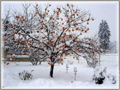 Le froid de l'hiver