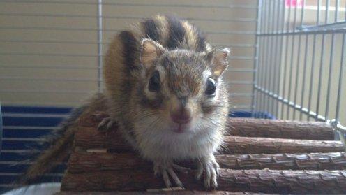 mon écureuil