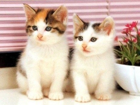 gatitos.