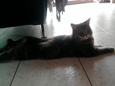 Ma Lola D'Amour !