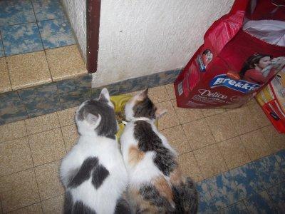 Ficelle et Filou !!! Le frère et la soeur ! !