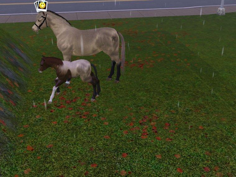 Petit poulain est né !!!