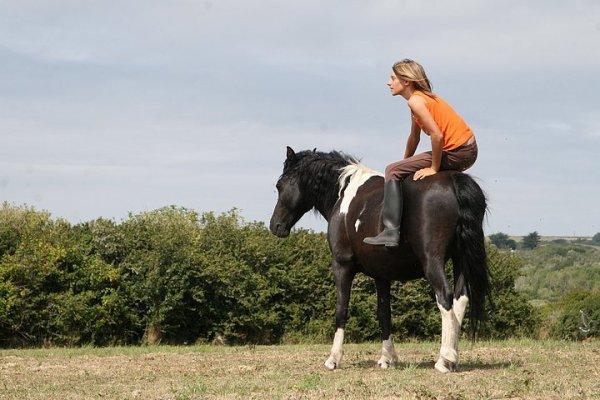 << Je vois parfois dans le regard d'un cheval la beauté inhumaine d'un monde d'avant le passage des hommes. >>