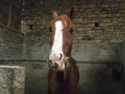 ♥♥  Cavalier, quelque soi l'obstacle, jette ton coeur par dessus & ton cheval ira le chercher  ♥♥