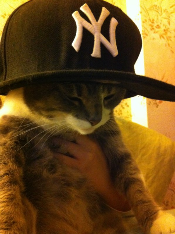 C'est un chat rappeur