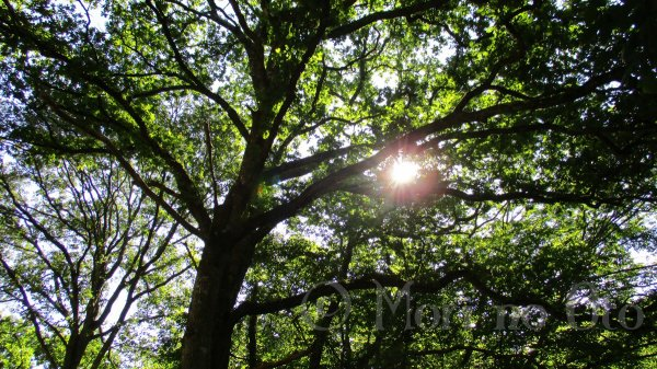 """Couper des arbres car ils deviennent """"trop vieux"""" ?"""