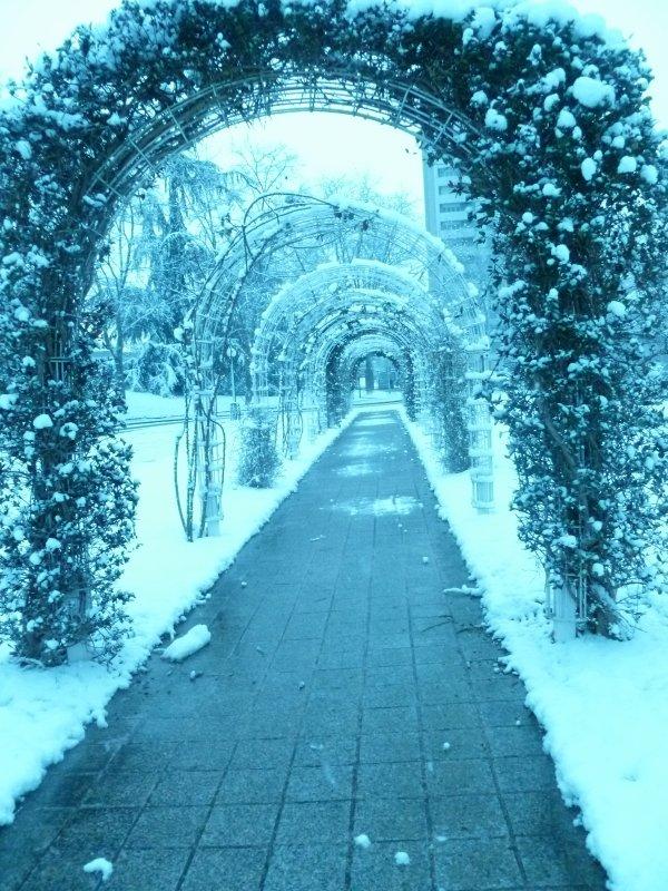 neige bleue lol