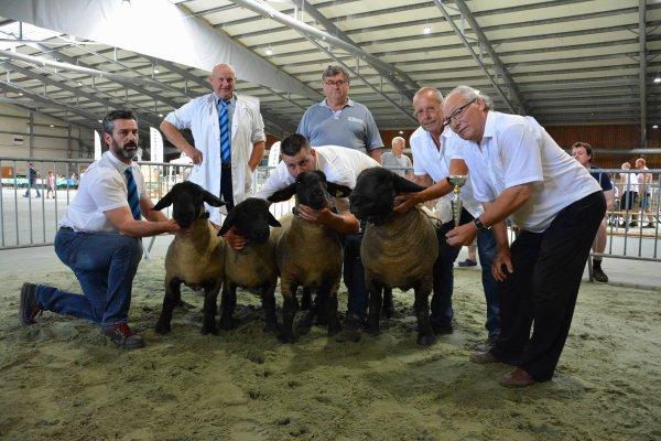 """Concours Provincial Ath 2017 """"prix d'élevage"""""""