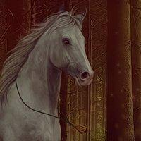 Ecurie du Panloup ▬ Elevage de chevaux Selle Français