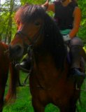 Photo de poney-chevaux-02