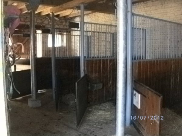 sellerie poneys