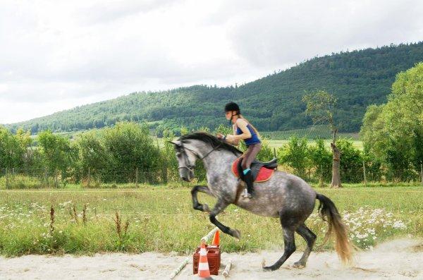 prune (cheval pas de louvemont)