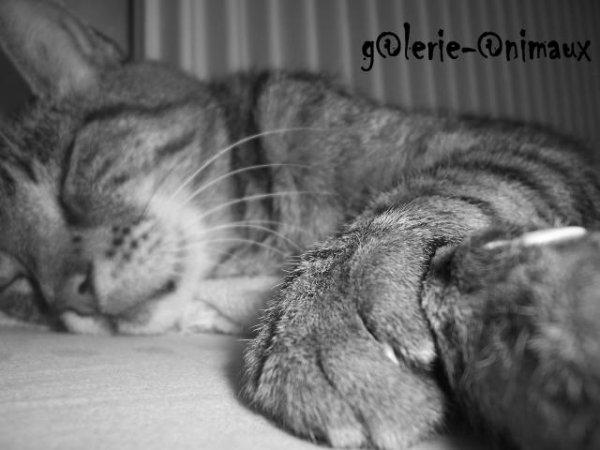 ... Petite g@lerie photo ...