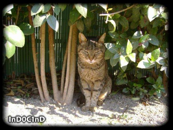 Bibi, le chat qui avait la belle vie
