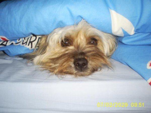 Virgule, un petit chien sympa