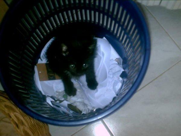Fifi, le chaton mignon