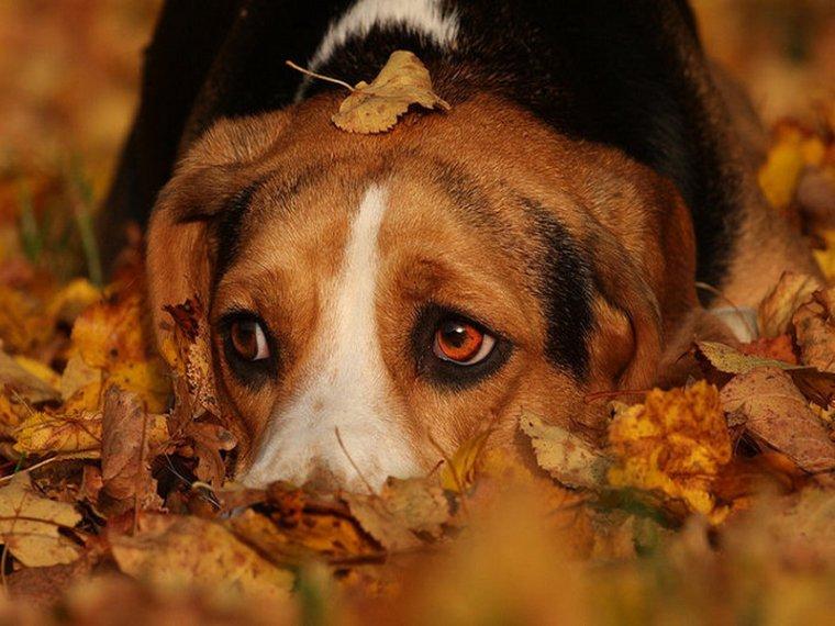O que seu cão pensa sobre você, você sabe?