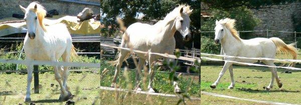 """""""Le cheval idéal, n'est pas le cheval parfait mais celui dont on aime tout mes les défauts."""""""