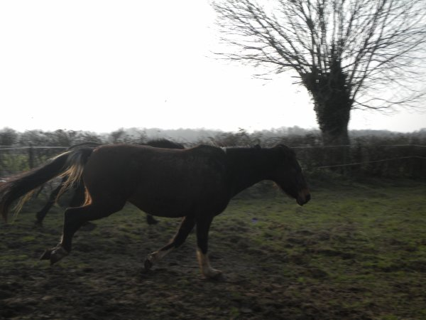 """""""L'amitié et la confiance valent plus que tout, du moment qu'elles viennent du cheval et de son cavalier."""""""