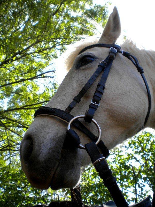 """""""Si quelqu'un te dit que ce n'est qu'un cheval, contente toi de sourire, il ne peut pas comprendre..."""""""