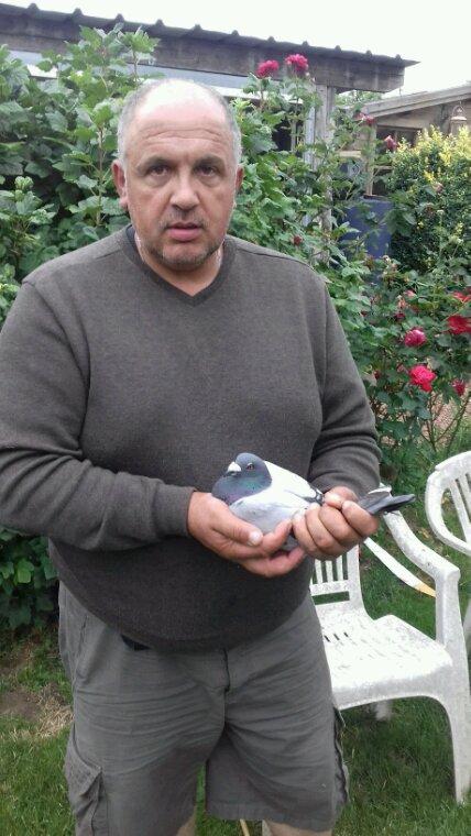 Pigeon perdu depuis 2014