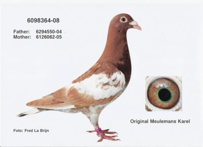 male Choco 6098364 B08 (acquisition septembre 2008)