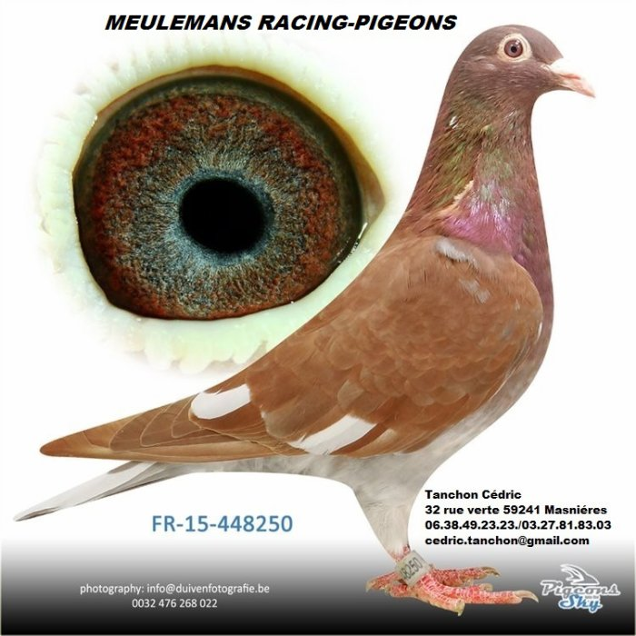 Blog de choco-Meulemans racing pigeon loft