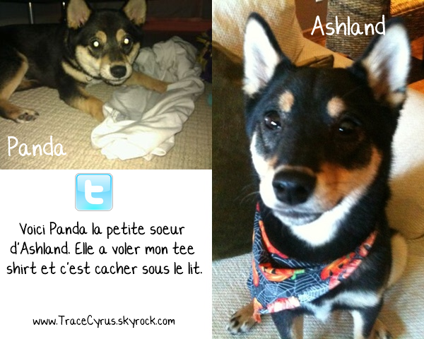 . Trace nous présente son nouveau chien qui est une femelle nommée Panda..