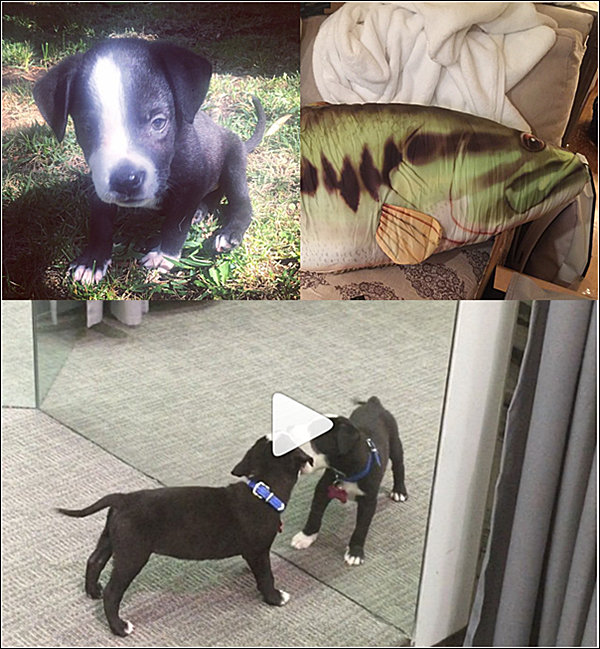 .  14 & 17.10.2015 |  Ashley a partagé deux photos et une vidéo trop craquante de Lucille, la chienne d'Olivia.  + Découvrez le lien de la vidéo plus bas pendant que la belle fait son petit babaysitting.  .