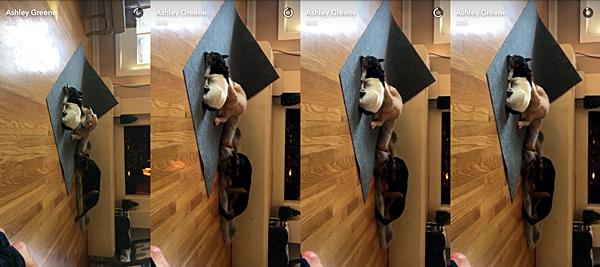 .  30.05.2016 |  Ashley toujours présente sur les réseaux sociaux !  Pour l'avant-dernier jour du mois de mai, Ashley toujours gaga de ses chiens nous a partagé une vidéo d'eux sur le tapis en train de faire un gros dodo devant la cheminée. D'ailleurs, je ne comprends pas le concept d'allumer la cheminée quand il y a un grand soleil dehors. Et vous, vous le comprenez ce drôle de concept ?   .