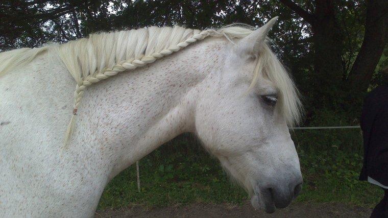 Les poneys de Françoise