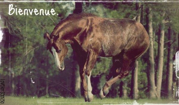 « On a tendance, de nos jours, à oublier que l'équitation est un art. Or, l'art n'existe pas sans amour. Mais celui qui n'a pas la discipline nécessaire et qui ne possède pas la technique ne peut prétendre à l'art. L'art, c'est la sublimation de la technique par l'amour. L'amour, afin qu'après la mort du cheval, vous ayez gardé en votre c½ur le souvenir de cette entente, de ces sensations qui ont quand même élevé votre esprit au-dessus des misères d'une vie humaine. »