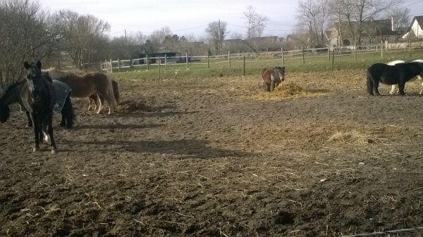10/02/18 les poney chouchou au padock