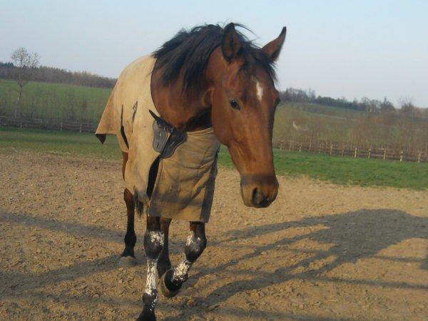 Un cheval Galope avec ses poumons & Gagne avec son caractère.