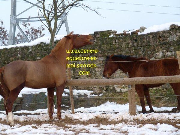 Gazelle et Kefren Lundi 8 mars 2010