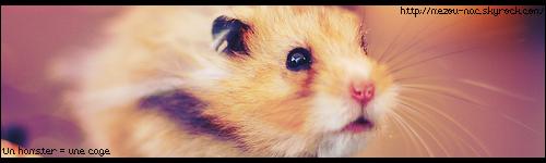 Un hamster = une cage
