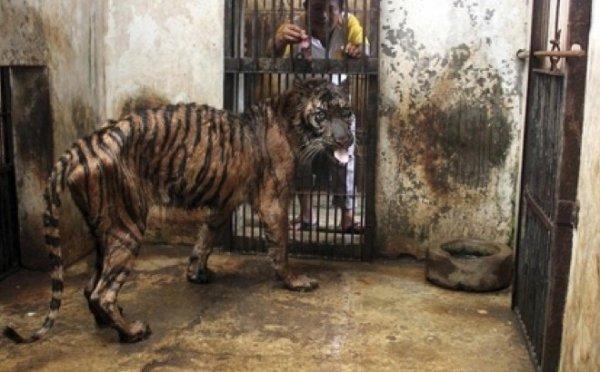 Le « zoo de la mort »