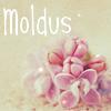 Moldus