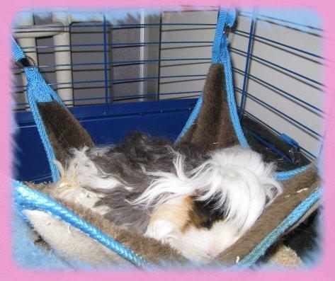 Blog de cochonsdinde67 page 10 mes 4 cochons d 39 inde - Fabriquer cage cochon d inde ...