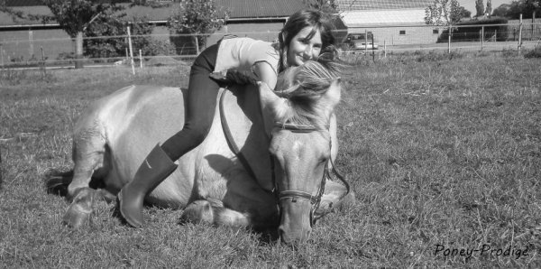 Regardez moi ce poney , il est l'image de la perfection <3 !