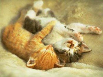 c pour Les amoureux des chats