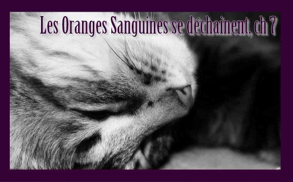Les Oranges Sanguines se déchainent, chapitre 7