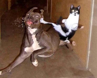 image drole karate