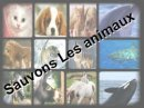 Photo de aidons-les-animaux-19
